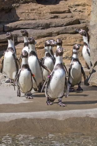 penguin intro 2_dennis dow.jpg