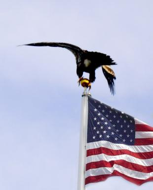 A--Eagle on pole.jpg
