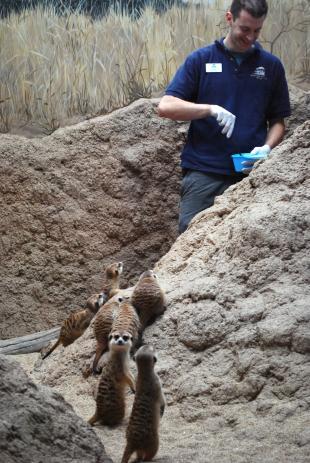 Meerkats 099 x.jpg