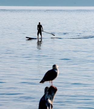 surfseagull2.jpg