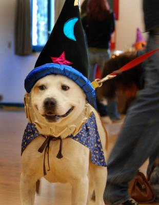 wizardog.jpg